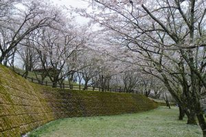 桜吹雪もキレイです