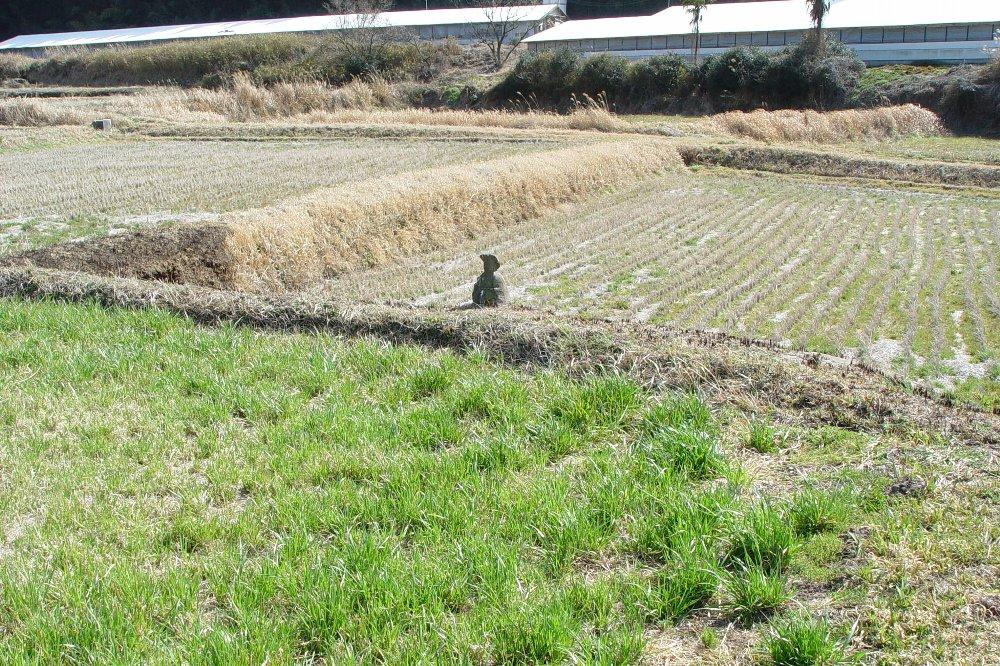 田んぼの土手にちょこんと鎮座しています。