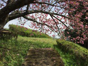 八重桜のミニトンネル